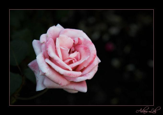 [Image: 2005_03_15_flower.jpg]