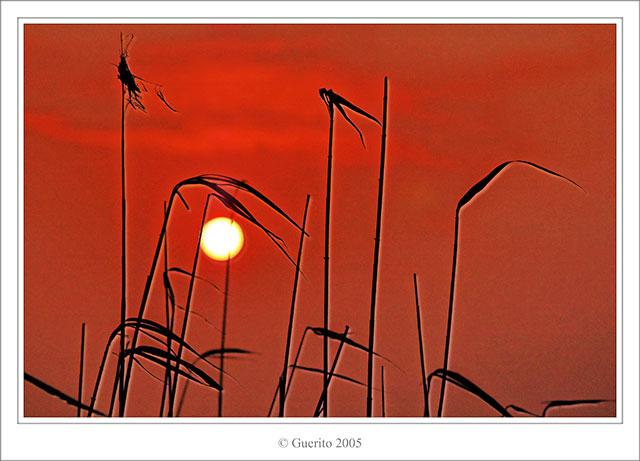[Image: 310_DSC_0072_framed.jpg]