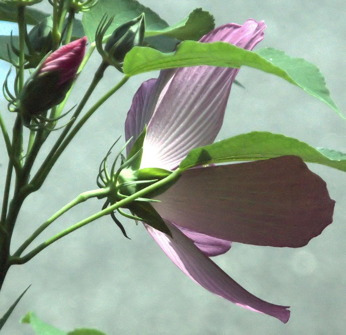 [Image: 36_flower2.jpg]