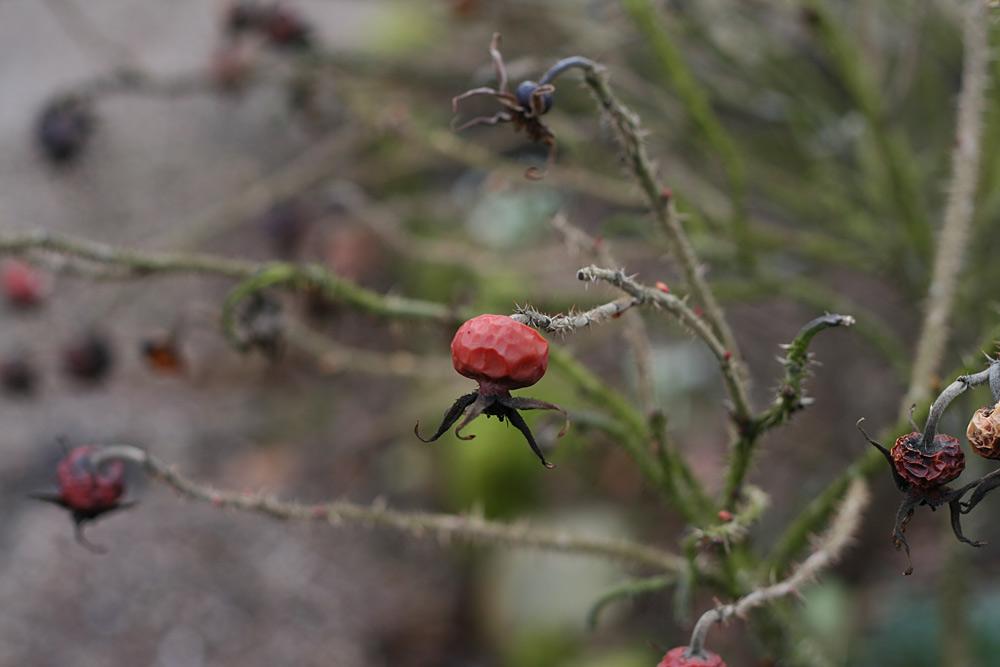 [Image: 38_spider.jpg]
