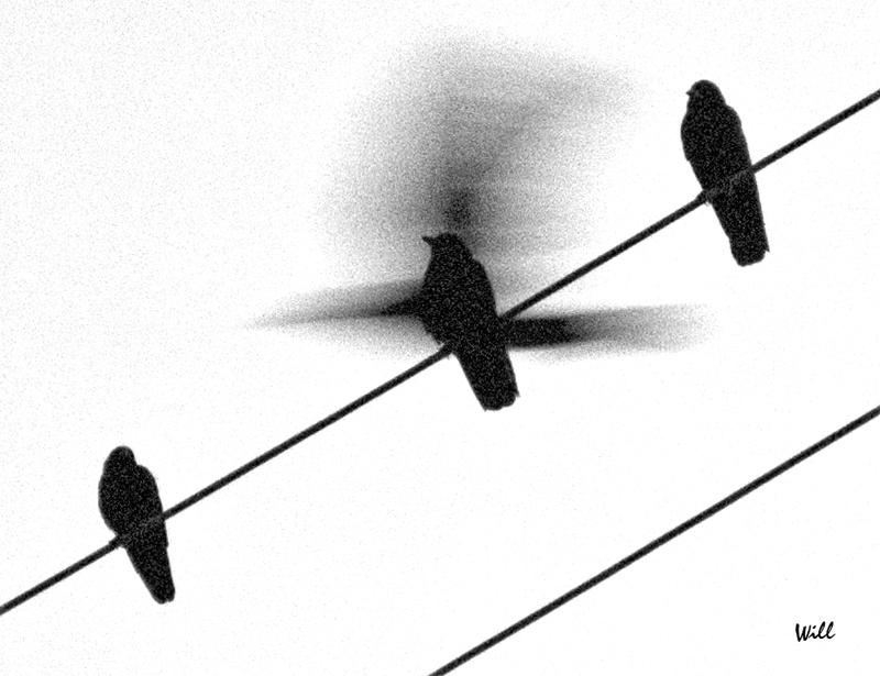 [Image: Flutter.jpg]