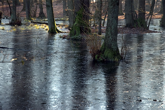 [Image: FrozenSwamp1.jpg]