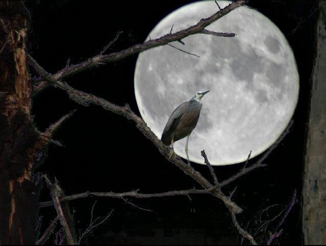 [Image: Moon-bird.jpg]