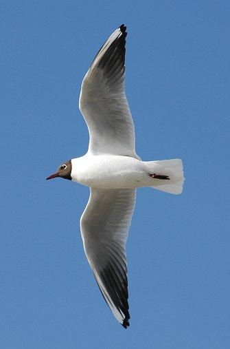 [Image: Seagull-Littlehampton5.jpg]