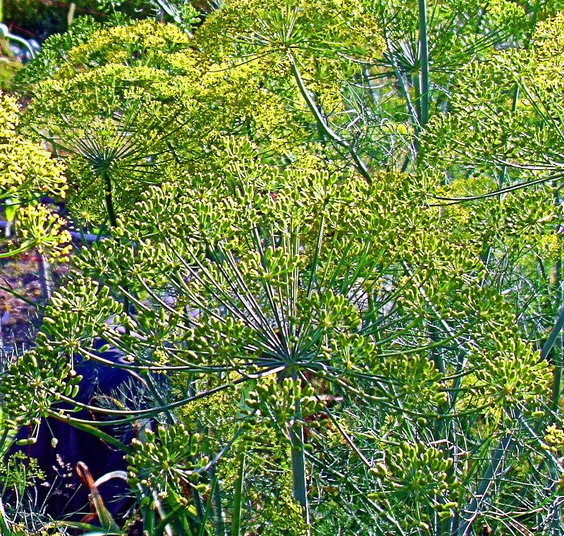 [Image: asparagusforest3SM.jpg]
