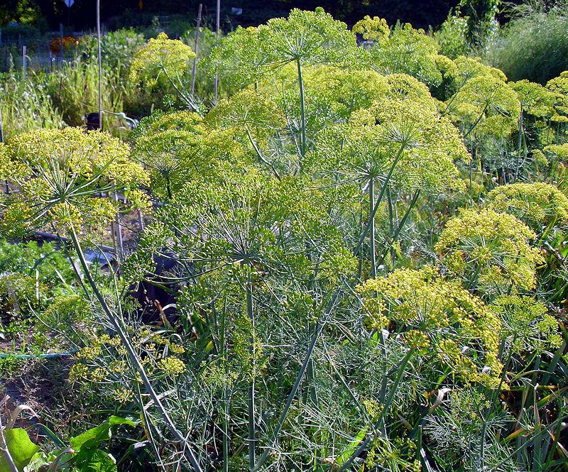 [Image: asparagusforestSM.jpg]