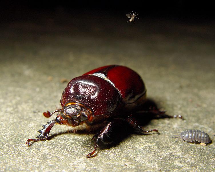 [Image: beetle.jpg]