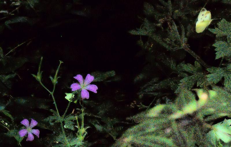 [Image: butterflyleaves1SM.jpg]