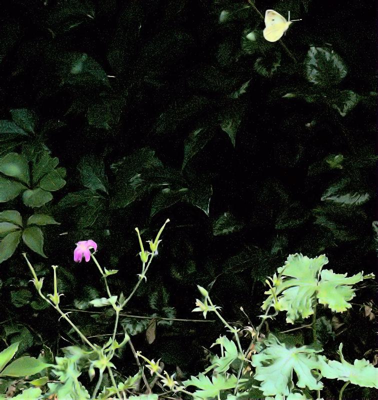 [Image: butterflyleaves2SM.jpg]