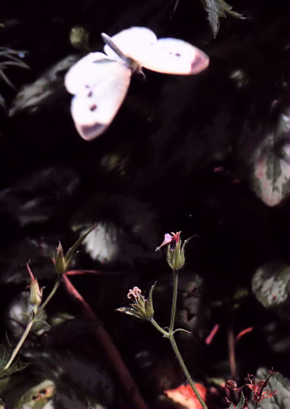 [Image: butterflyleaves3SM.jpg]