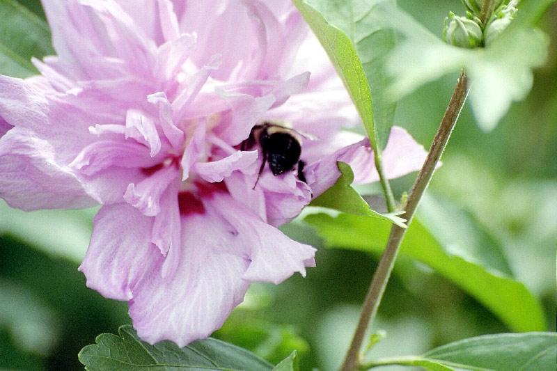 [Image: flower22fu.jpg]