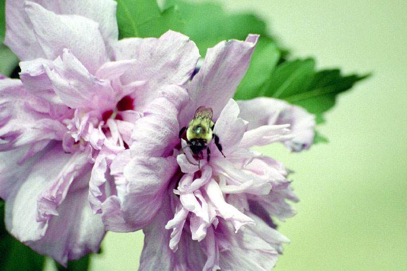 [Image: flower73ue.jpg]