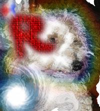 [Image: overshopped.jpg]