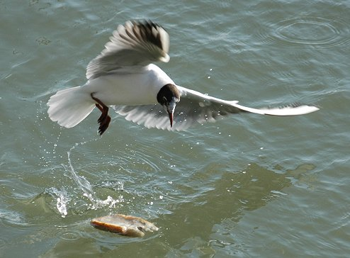 [Image: seagull-bread.jpg]