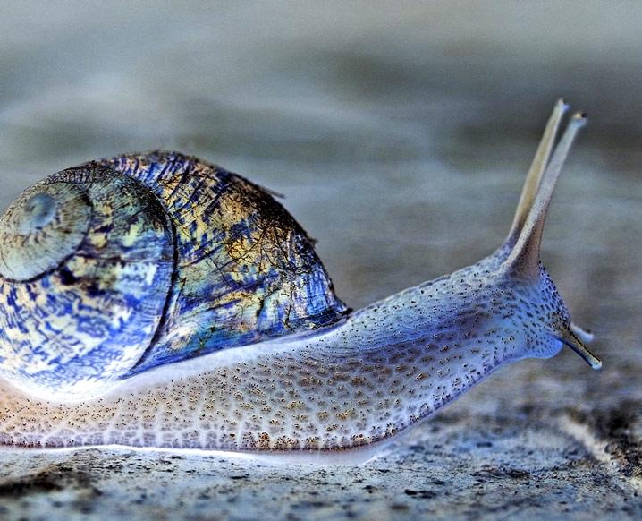 [Image: snailnegativesmall.jpg]