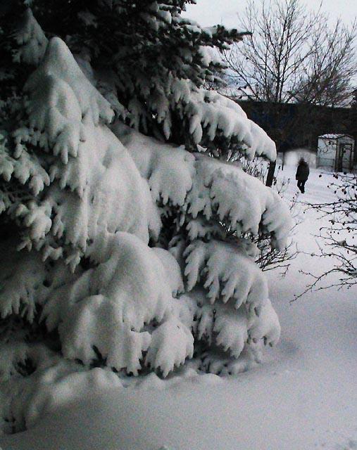 [Image: snowtreeSM.jpg]