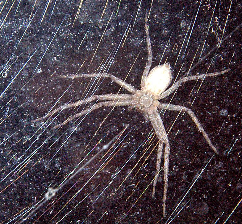 [Image: spiderontheglass.jpg]