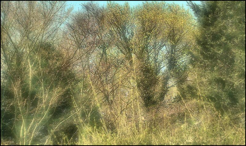 [Image: spring11SM.jpg]