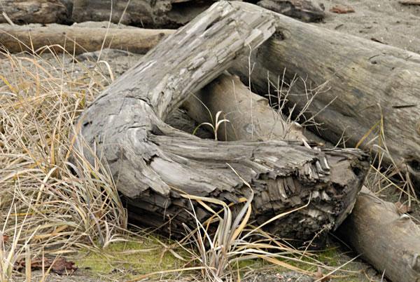 [Image: stump2.jpg]
