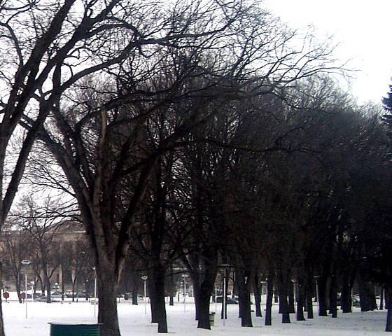 [Image: treesnearledgeSM.jpg]
