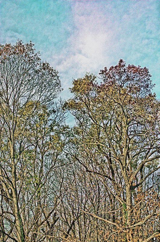 [Image: treetops5SM.jpg]