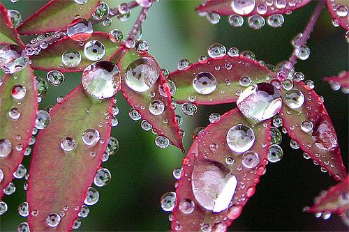[Image: waterdropd2.jpg]