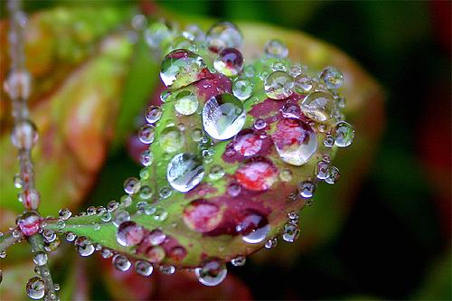 [Image: waterdrops2.jpg]