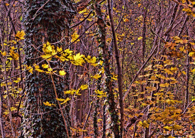 [Image: woods2SM.jpg]