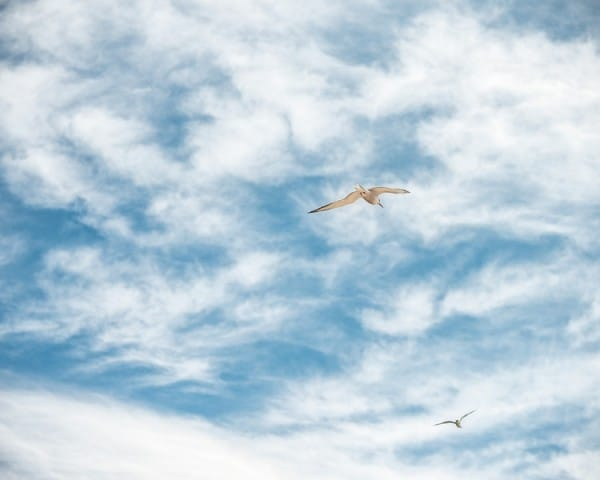 Seagulls in sky