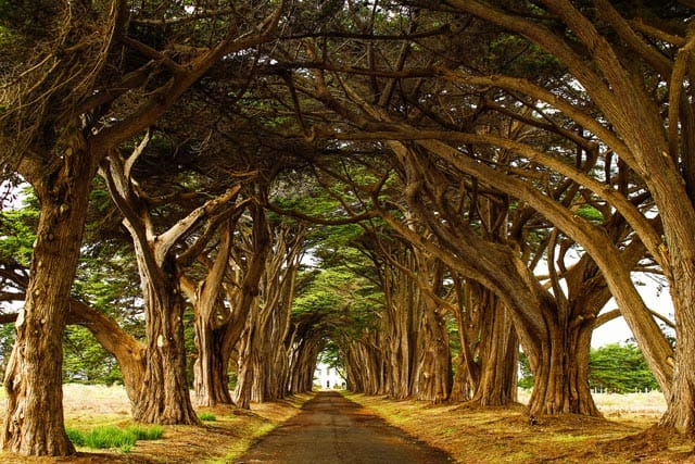 Opt-Cypress-Tree-Tunnel