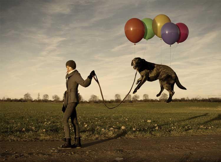 Lazy-Dog-Composite-Photo
